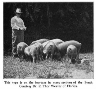 The Great Hog-Eating Confederacy – The New Inquiry | Friday Readingtp | Scoop.it