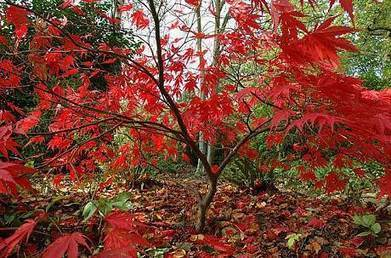 How to choose the right tree to grow | Gardening | Scoop.it