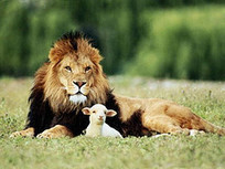 Common Core Algebra 1: Lion or Lamb? | College and Career-Ready Standards for School Leaders | Scoop.it