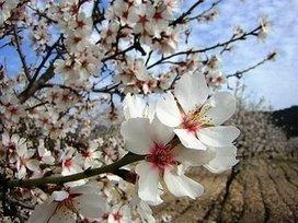 Se Equivocarme solo - Jecego: Los árboles de mi calle lloran flores. | artesaniaflorae | Scoop.it