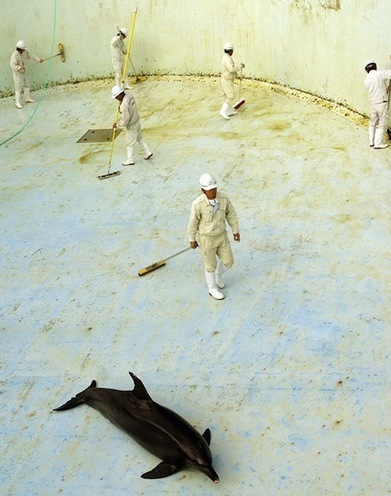 Heartbreaking Images of Dolphins in Drained Aquariums the Result of 'Routine' Practice | OUR OCEANS NEED US | Scoop.it
