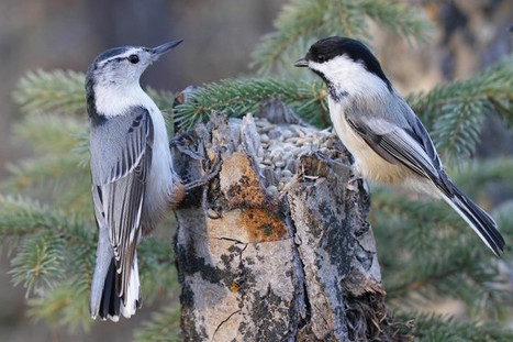 Map your backyard to attract birds - BirdWatching | Our Evolving Earth | Scoop.it