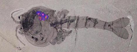 Brutpflege: Mama ist die Beste - seit über 500 Millionen Jahren | Amocean MeerWissen | Scoop.it