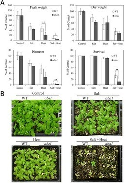 ABA Is Required for Plant Acclimation to a Combination of Salt and Heat Stress | Plant Gene Seeker -PGS | Scoop.it