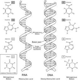 Iones (II) ¡en tus células!   quimica   Scoop.it