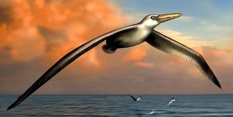 On a retrouvé le plus grand oiseau du monde | Merveilles - Marvels | Scoop.it