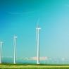 Barking Up the Wrong Tree With Renewable Energy