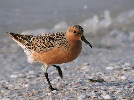 Les oiseaux menacés par le réchauffement | ecology and economic | Scoop.it