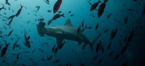 Google reconnaît que l'Internet mondial est attaqué par des requins | Remembering tomorrow | Scoop.it