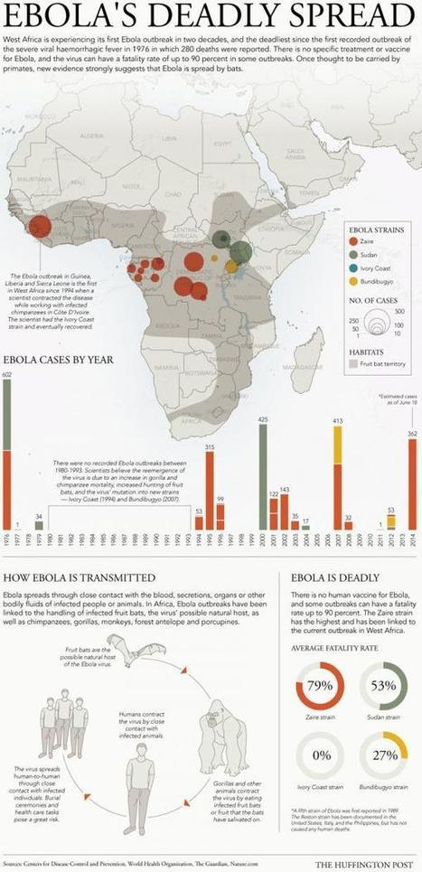 """Mapping Africa's """"Totally Out Of Control"""" Ebola Epidemic   Zero Hedge   Epidemiology Research   Scoop.it"""