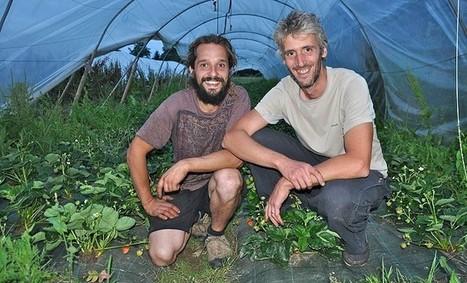 Les maraichers de Marsac sur l'Isle vont pérenniser leur exploitation | Agriculture Aquitaine | Scoop.it