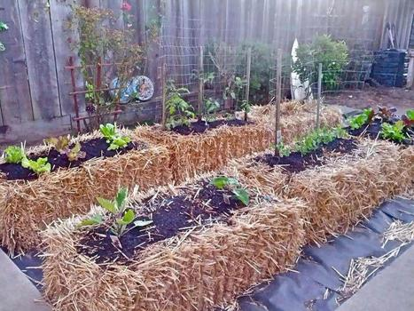 Straw Bale Gardening: Start to Finish | Gardening ideas | Scoop.it