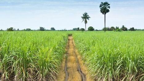 A Maurice, de nombreuses familles réclament leurs terres exploitées @Investorseurope#Mauritius | Investors Europe Mauritius | Scoop.it