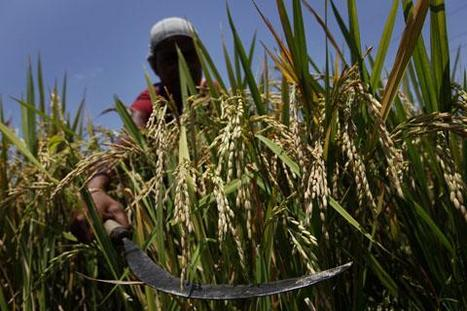 Climate Change Threatens World Food Production | Africa | English | Climate change challenges | Scoop.it