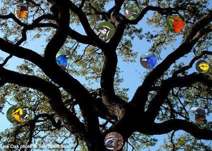 All About Birds : Migration | KainonC3 | Scoop.it