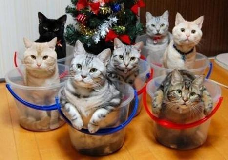 Twitter / EmrgencyKittens: cats in buckets everywhere ... | Funny and cute animals | Scoop.it
