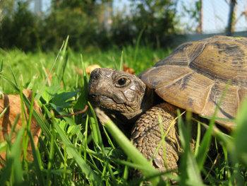 Cómo cuidar una tortuga de tierra | Agua | Scoop.it