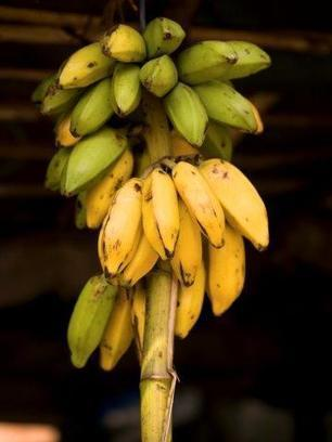A better understanding of bananas could help prevent blindness - ACS (2016)  | Ag Biotech News | Scoop.it