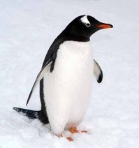 6 Penguin Types Of Safe Links You Can Get | SEO Tips and Guides | Scoop.it