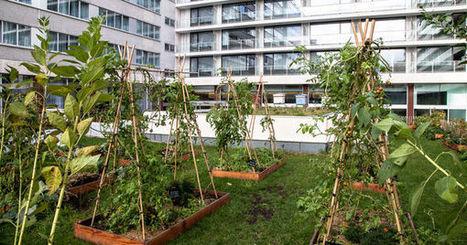 Et si on essayait l'agriculture sur toit? | Agriculture urbaine et rooftop | Scoop.it