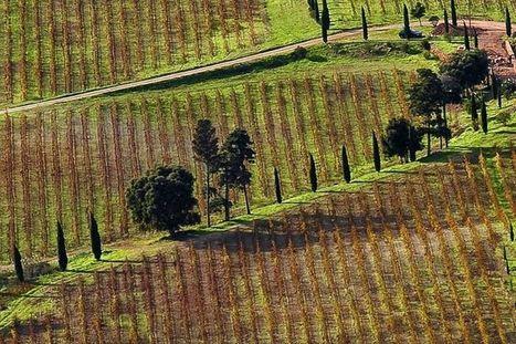 Une nouvelle assurance subventionnée pour les viticulteurs - L'Usine Nouvelle | Le Vin et + encore | Scoop.it