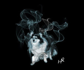 Pottermore Insider: Our favourite Patronus Charm fan art... | Pottermore | Scoop.it