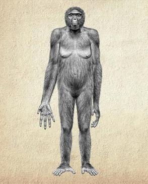 Evolución Humana: GENERO AUSTRALOPITECUS   La Evolución Humana   Scoop.it