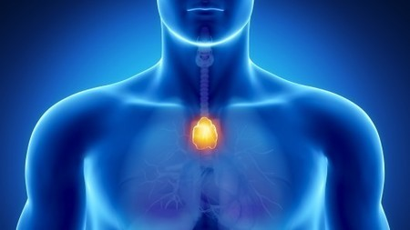 World-first regeneration of a living organ | lifestyle of the future | Scoop.it