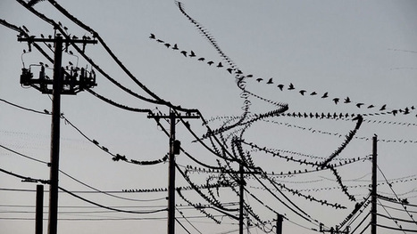 Amazing Video Clips Visually Isolate the Flight Paths of Birds | Colossal | Creative Computation | Scoop.it