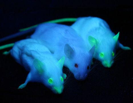 ¿Qué dicen los ratones de nuestra sexualidad?   Revolución Tres ...   Curiosidades sobre sexo   Scoop.it