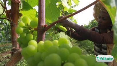 Ethiopie, terre de viticulture | Le vin quotidien | Scoop.it