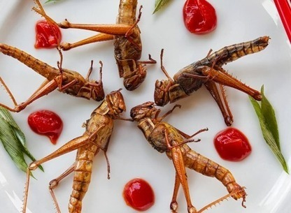 L'aile ou la patte ? | Entomophagy: Edible Insects and the Future of Food | Scoop.it