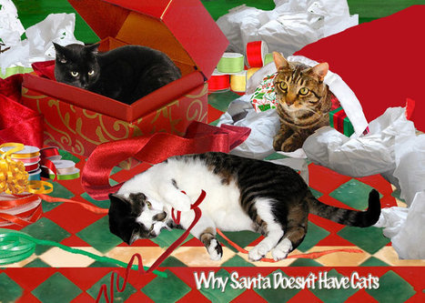 Cat Christmas Cards set of 5 cat cards- Cats and Santa | Christmas Cat Ornaments and Cards | Scoop.it