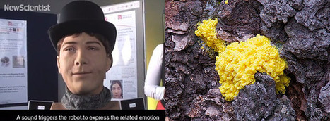Researchers' robotic face expresses the needs of yellow slime mold (video) - Engadget | Randomgrid | Scoop.it