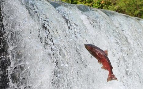 With Chuitna, Alaska faces a historic decision for wild salmon habitat protection - Alaska Dispatch News | Farming, Forests, Water & Fishing (No Petroleum Added) | Scoop.it