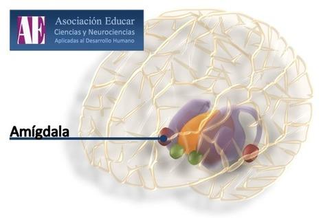 Neurociencias: Neurobiología y el arte de la persuasión. | Terapia de sonido | Scoop.it
