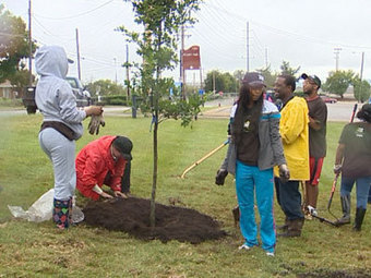 TSU Students Help Plant Trees | Tree Campus USA | Scoop.it