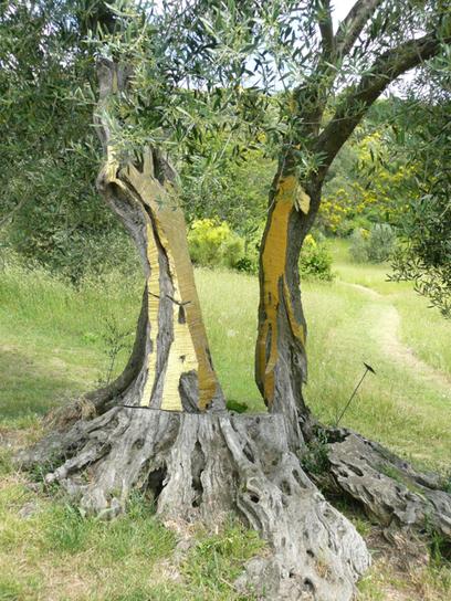 Daniel Spoerri: tree | Curiosités planétaires | Scoop.it