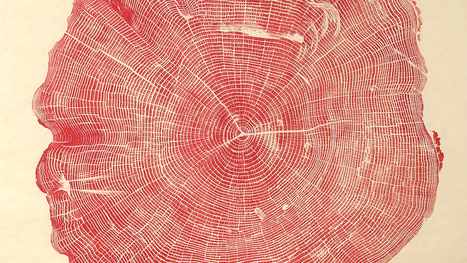 Beautiful Photos Of Tree Rings Remind Us To Slow Down A Little | Education for Sustainable Development | Scoop.it