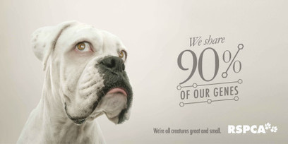 Animals with Human Eyes in Australia: a campaign for the RSPCA ... | Animals R Us | Scoop.it