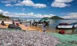 On the shores of Malawi's lake of stars, activists raise uranium fears | Santorri Chamley | Global development | The Guardian | Development Economics | Scoop.it