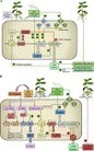 A review: Quorum sensing in Bradyrhizobium | Plant-Microbe Interaction | Scoop.it