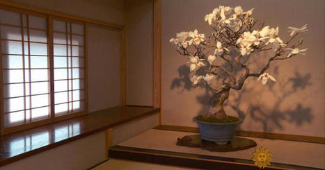 Postcard from Japan: Caring for bonsai | AP HUMAN GEOGRAPHY DIGITAL  STUDY: MIKE BUSARELLO | Scoop.it