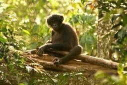 Dans la jungle du Congo (RDC) ☺ Couleurs d'Aurore | My topics | Scoop.it