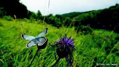 कहां गई तितलियां? - खबरें l Deutsche Welle | वैज्ञानिक सोच | Scoop.it