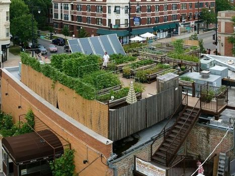 Rooftop Farming Is Getting Off The Ground | Societal Resilience, Mobility, Living, Logistics, Infrastructure | Scoop.it