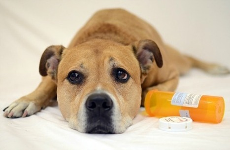 Is Your Home Poisonous to Pets? - Pet360 Pet Parenting Simplified | Social Media and Animal Shelters | Scoop.it