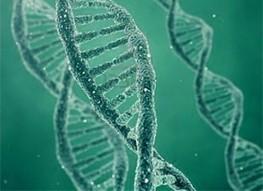 Scientists Identify Novel Genetic Markers For Lou Gehrig's Disease In Han Chinese | Institut Pasteur de Tunis-معهد باستور تونس | Scoop.it