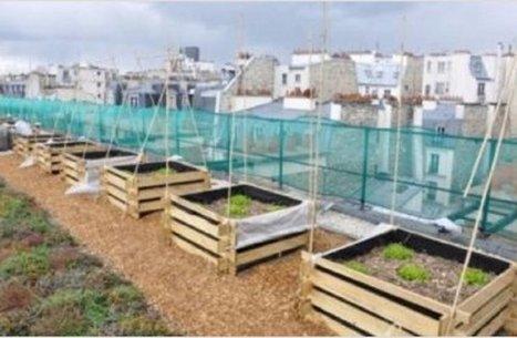 Les toits pourraient être le garde-manger de Paris | potager urbain | Scoop.it