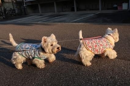 イモムシとケムシの違いって毛がはえているかどうかかな   West Highland White Terrier   Scoop.it